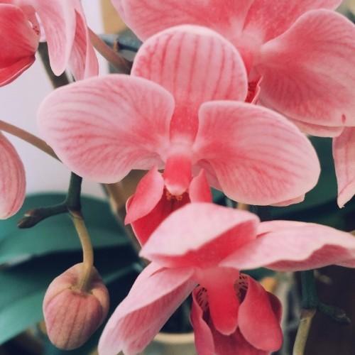 Michael Uzowuru - Pink Orchids cover