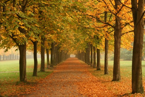 Autumn_trees_in_Dresden